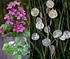 ЛУНАРИЯ - МОНЕТНОЕ ДЕРЕВО (Lunaria Biennis)