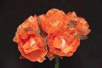 5635-1-19 оранж упаковка 12 букетов (72шт)