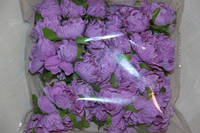 Букет фиолетовый  2015-1-3-1  упаковка  6 букетов