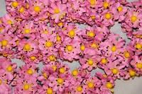 Незабудка букет 2015-1-5-1 розовый  упаковка 24 букета