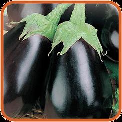 Баклажан Черный красавец- средне ранний с плодами грушевидной формы для кулинарии и консервирования