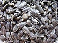 Семена подсолнечника СУР - сорт ультраранний (Краснодар)