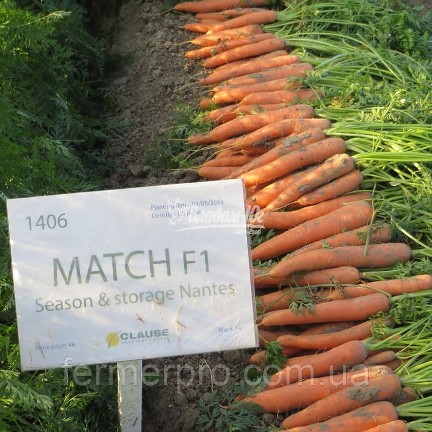 Семена моркови Матч F1 \ Match F1 100.000 семян Clause
