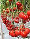 Семена томата Сарра F1 250 семян Clause , фото 4