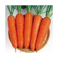 Морковь Виктория F1 Шантане (Seminis) 0,2 г (перефасовано Vse-semena-krm)