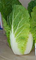 ОРІЄНТ СТАР F1 - насіння капусти пекінської, Takii Seeds, фото 1