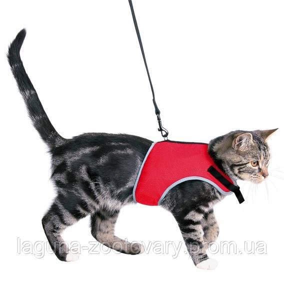 Шлея-жилетка с поводком для кота