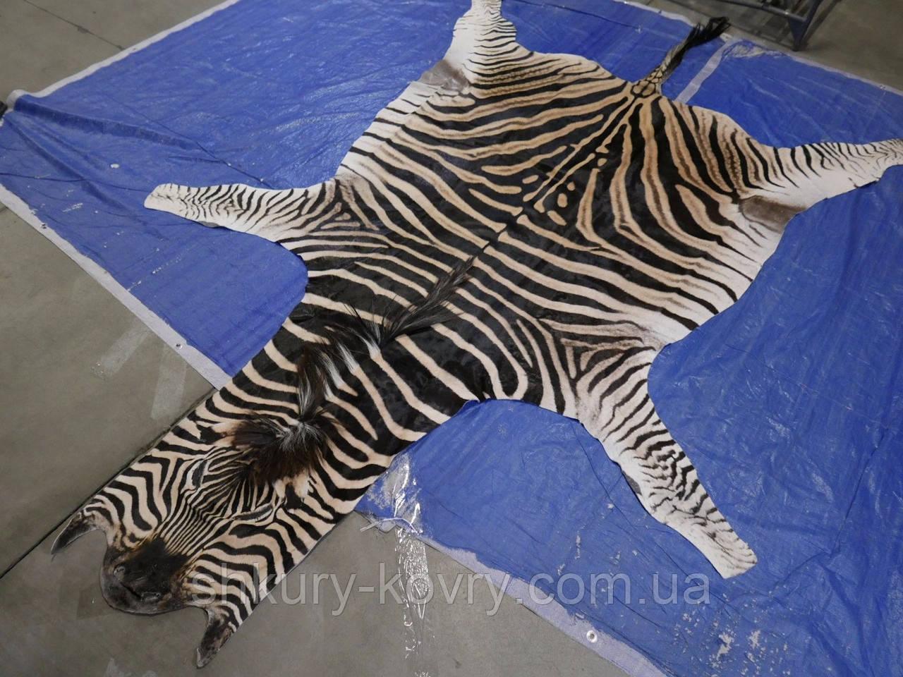 Шкуры африканской зебры на пол для декора интрьера