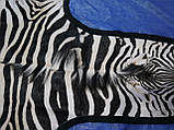 Настоящая шкура ковер из зебры Южная Африка, фото 2