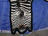 Настоящая шкура ковер из зебры Южная Африка, фото 4