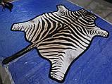 Шкура из африканской зебры на пол сделанная ковром, фото 3