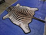 Шкура из африканской зебры на пол сделанная ковром, фото 4