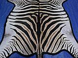 Шкура из африканской зебры на пол сделанная ковром, фото 6