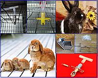 Содержание кроликов и грызунов