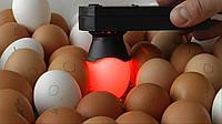 Овоскоп ОВ1-60-Д  для всех видов яиц