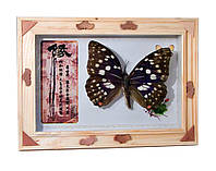 "Бабочка в рамке (17,3х12,3х2,5 см)(EW-6 5"")"