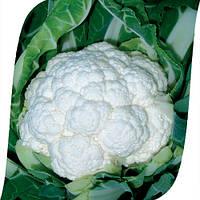 Капуста Фридом F1 Seminis 2500 семян, фото 1