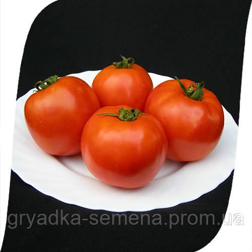 Томат Таня F1 Seminis 1000 семян