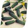 Огурец Меренга F1 Seminis 1000 семян
