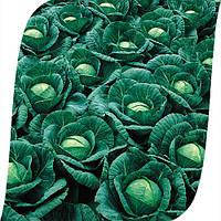 Капуста Ринда F1 Seminis 2500 семян, фото 1