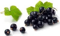Черная смородина в геле (50% ягод)