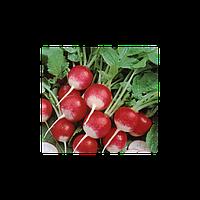 Полонеза (Дуо) семена редиса (Moravoseed, Чехия)