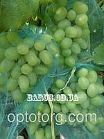 Сетка для винограда 5 кг от ос,пчел,птиц размер 29*40