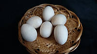 Яйцо-заготовка из дерева, 2,5-3 см, 6/4 (цена за 1 шт. + 2 гр.)