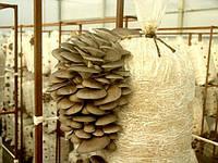 Мешки для выращивания грибов 45 микрон,  38*90см