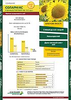 Семена подсолнечника Соларни КС