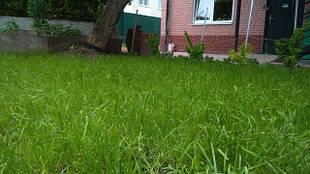 Газонні трави і травосуміші для пасовища і сінокосу