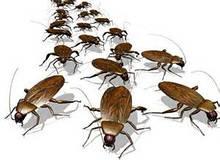 Средства защиты от тараканов и муравьев