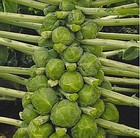 ФРАНКЛИН F1 - семена капусты брюссельской, 2 500 семян, Bejo Zaden, фото 1