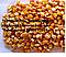 Гибрид кукурузы Солонянський 298 СВ ( 16 г. 20.000 грн/ тонна)