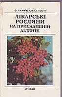 Лікарські рослини на присадибний ділянці Ф.І. Мамчур