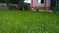 Теневой газон семена (травосмесь)
