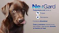 NexGard жевательная таблетка (Merial,Франция)