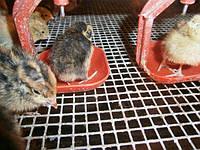 Системы ниппельного поения (СНП) для птицы