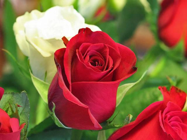 Минеральное удобрение для роз