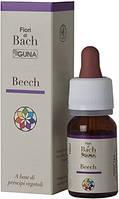 BEECH - Бук (№ 3)