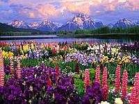 """Набор алмазной вышивки (мозаики) """"Весна в Альпах"""""""