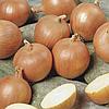 ТАМАРА F1 - семена лука репчатого 10 000 семян, Bejo Zaden