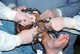 Апарат Ілізарова d 140, травматологічний інструментарій з нержавіючої сталі, фото 4
