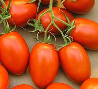 САФАИКС F1 - семена томата детерминантного, 2 500 семян, Syngenta, фото 1