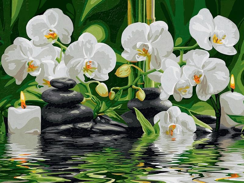 Картины по номерам 30×40 см. Оазис наслаждения