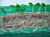 Хочу передать вам оригинальный способ выращивания рассады.