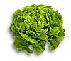Китония - насіння салату тип Дуболистный дражування 1 000 насінин, Rijk Zwaan