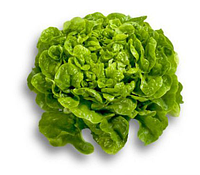 Китония - насіння салату тип Дуболистный дражування 1 000 насінин, Rijk Zwaan, фото 1