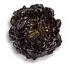 Кли - семена салата тип Саланова дражирование 1 000 семян, Rijk Zwaan