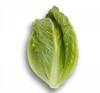 Крунчита - насіння салату тип Ромен дражоване 1 000 насінин, Rijk Zwaan